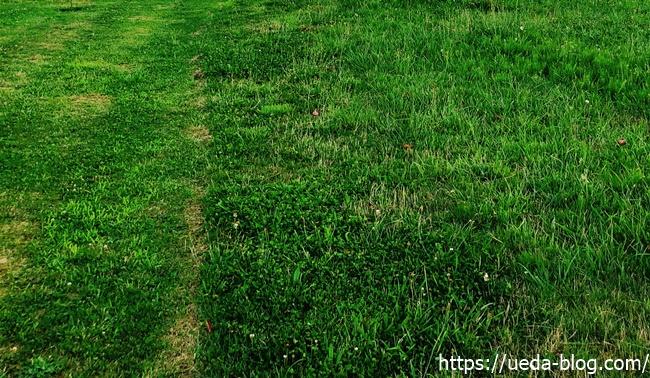 無料なので芝目がやや粗くラフが深い【ほぼ雑草】