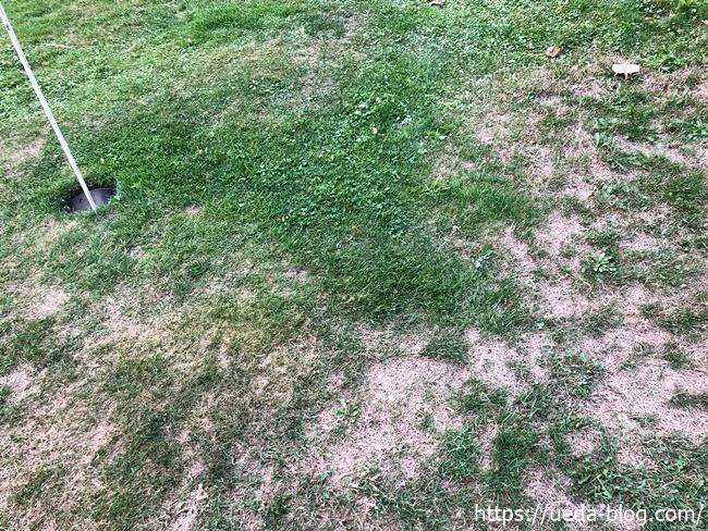 グリーン周りの芝がほぼない