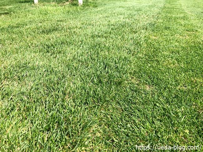 さとらんどパークゴルフ場は芝の状態が良くおすすめ