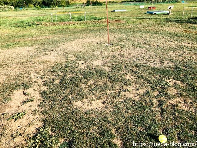 芝の状態が悪くパット時の挙動が不安定